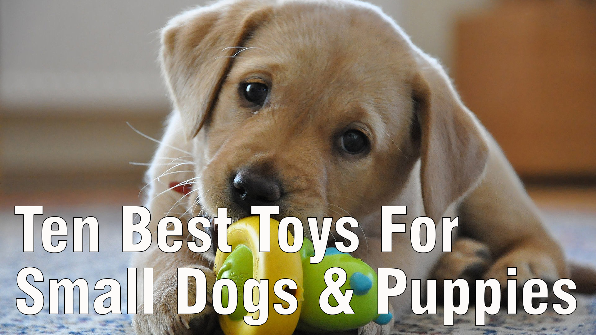 Best Small Dog Toys : Five fun political dog toys dogopedia