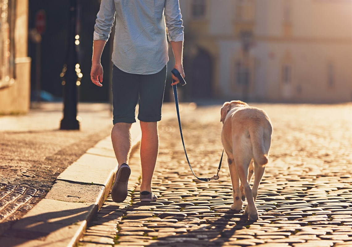 How to stop dog from pulling on their lead