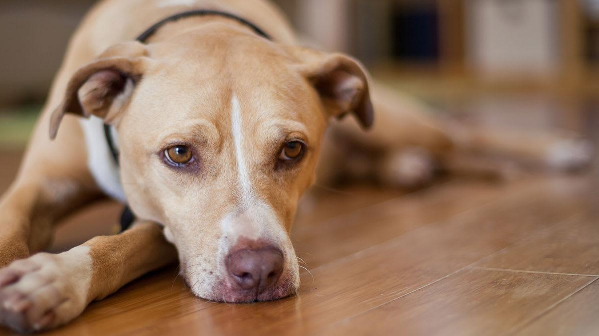 How To Treat Dog Diarrhea - Complete Guide  Dogopedia-5805