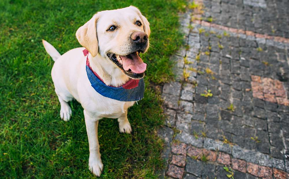 How To Clicker Train A Dog - Complete Guide | DogOPedia