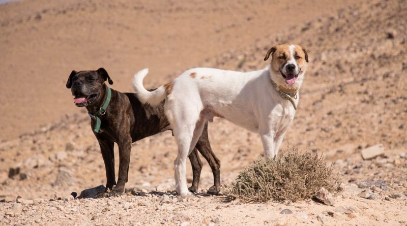 Is it Safe to Walk a Dog in Hot Weather?